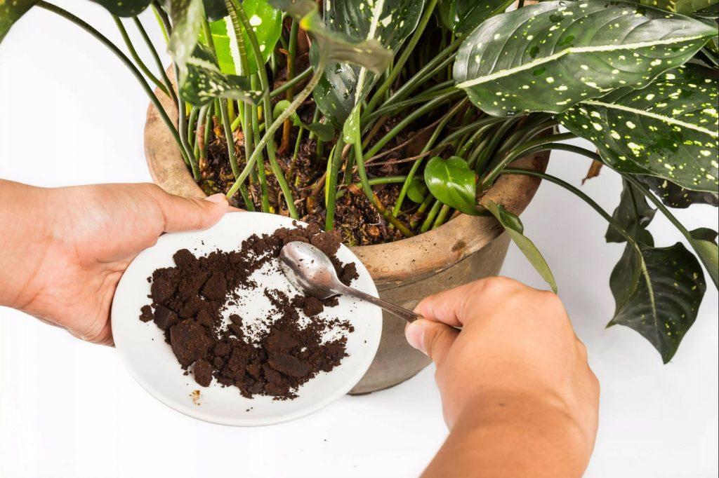fondi di caffè in giardino